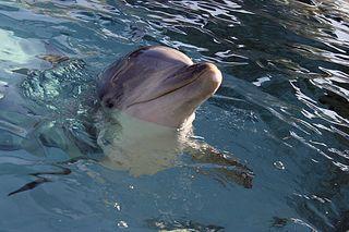 SeaWorld_6